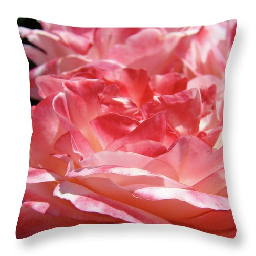Rose Throw Pillow featuring the photograph Pink White Roses Floral Art Prints Rose Baslee Troutman by Baslee Troutman