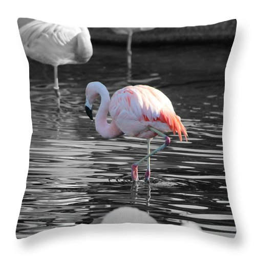 Palm Desert California Throw Pillow featuring the photograph Pinky by Colleen Cornelius