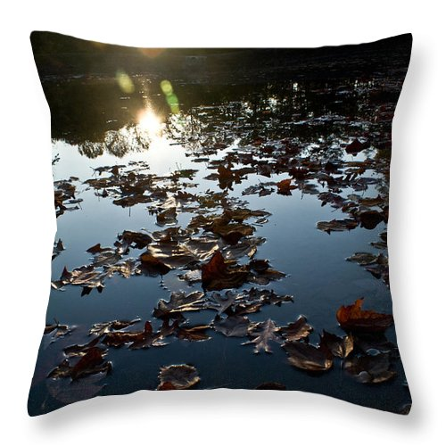 Placid Throw Pillow featuring the photograph Placid by Douglas Barnett