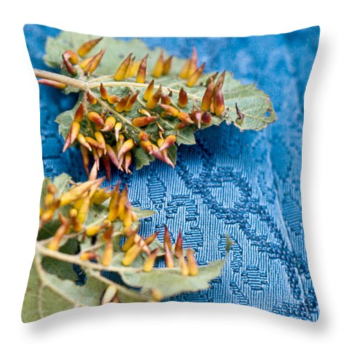 Plant Throw Pillow featuring the photograph Plant Galls by Douglas Barnett