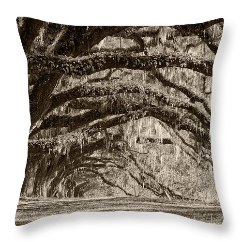 Live Oak Throw Pillow featuring the photograph Plantation Drive Live Oaks by Dustin K Ryan