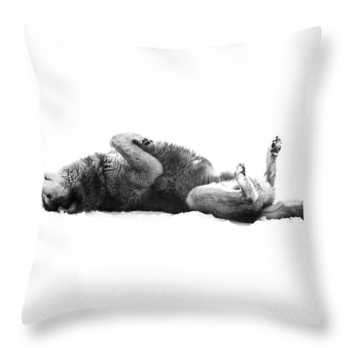 Wolf Throw Pillow featuring the photograph Playful Gray Wolf Photo by Stephanie McDowell