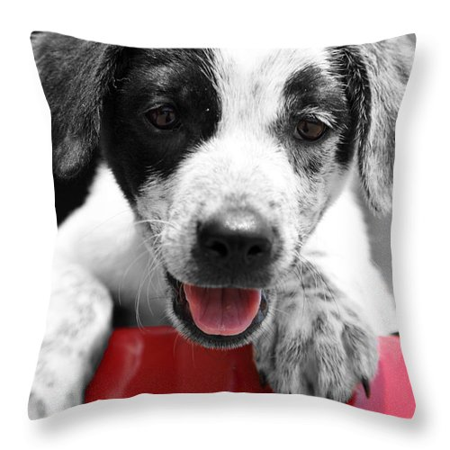 Puppy Throw Pillow featuring the photograph Playing by Amanda Barcon