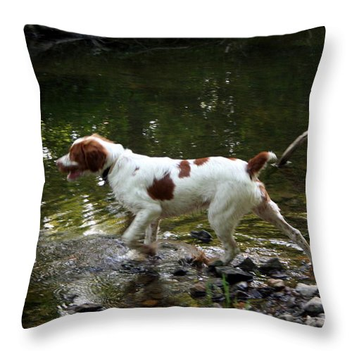 Spaniel Throw Pillow featuring the photograph Playing In The Creek by Rebecca Smith