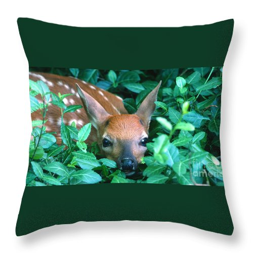 Fawn Throw Pillow featuring the photograph Playing Peekaboo by Sandra Bronstein
