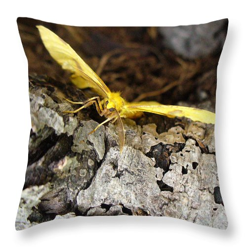 Insects Throw Pillow featuring the photograph Pleased To Meet You by Peggy King