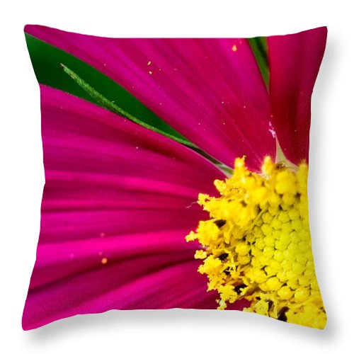 Plink Throw Pillow featuring the photograph Plink Flower Closeup by Michael Bessler