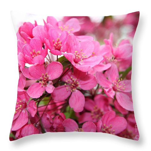 Pink Plum Blossoms Throw Pillow featuring the photograph Plum Blossoms by Christiane Schulze Art And Photography