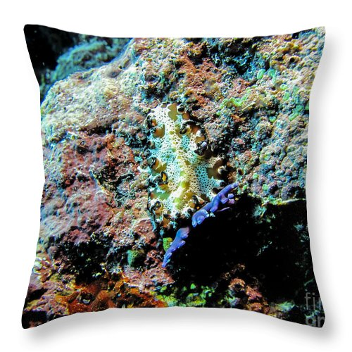 Coral Throw Pillow featuring the photograph Pohnpei Flatworm by Dan Norton