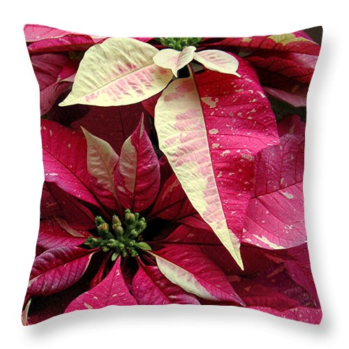 Nature Throw Pillow featuring the photograph Poinsettias - Painted And Speckled by Lucyna A M Green