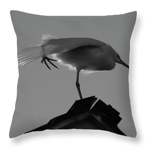 Nature Throw Pillow featuring the photograph Poised Egret by Lorenzo Williams