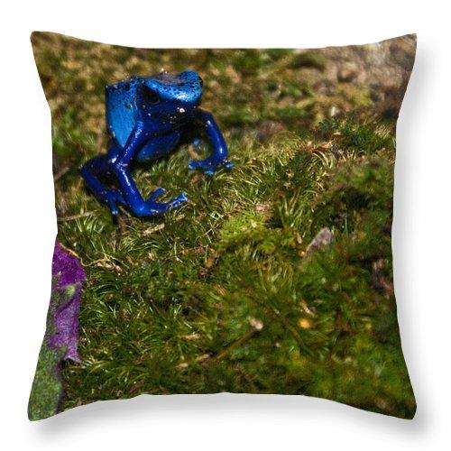 Poison Throw Pillow featuring the photograph Poison Dart by Douglas Barnett