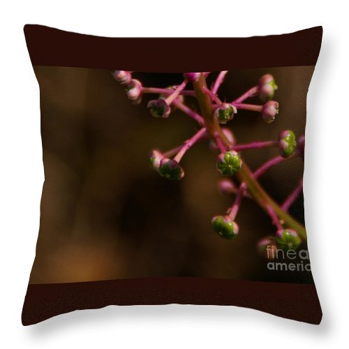 Pokeweed Throw Pillow featuring the photograph Pokeweed Emerges by Linda Shafer