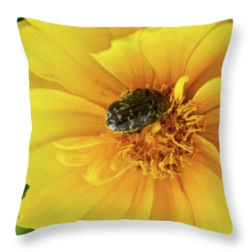 Pollen Throw Pillow featuring the photograph Pollen Feeding Beetle by Douglas Barnett
