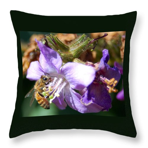 Bee Throw Pillow featuring the photograph Pollinating 1 by Amy Fose
