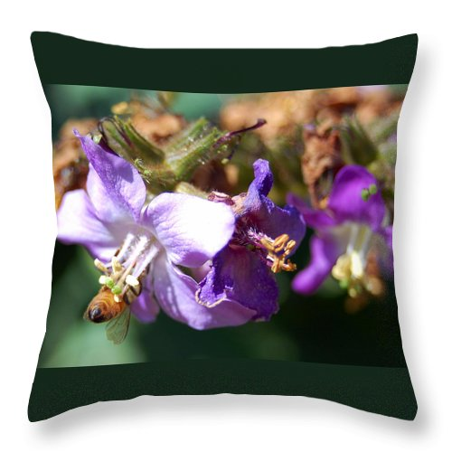 Bee Throw Pillow featuring the photograph Pollinating 3 by Amy Fose