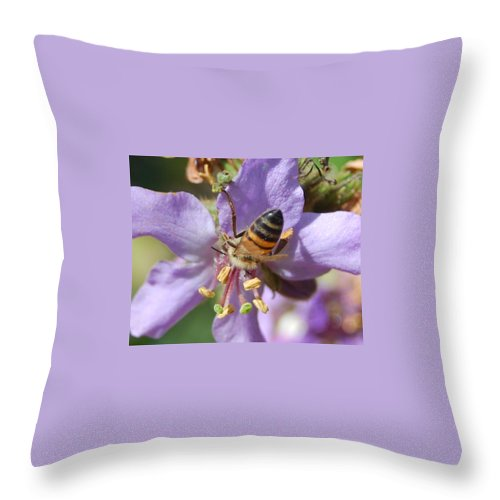 Bees Throw Pillow featuring the photograph Pollinating 4 by Amy Fose