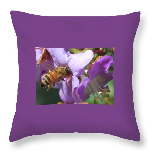 Bee Throw Pillow featuring the photograph Pollinating 5 by Amy Fose