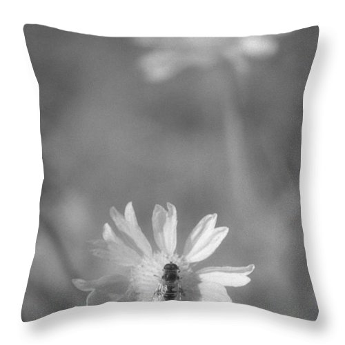 Pollinate Throw Pillow featuring the photograph Pollination by Richard Rizzo