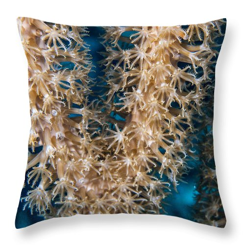 Coral Throw Pillow featuring the photograph Polyp Vee by Jean Noren