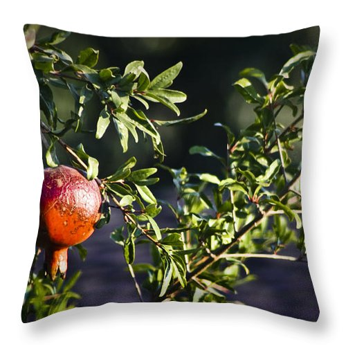 Pomegranate Throw Pillow featuring the photograph Pomegranate by Teresa Mucha