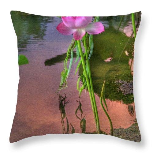 Pond Throw Pillow featuring the photograph Pond Dreams10 by Sam Davis Johnson