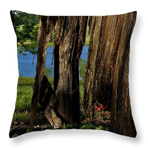 Landscape Throw Pillow featuring the photograph Pond Fragments by Rachel Christine Nowicki