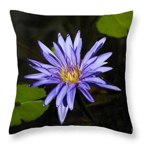 Pond Lily Throw Pillow featuring the photograph Pond Lily by David Lee Thompson