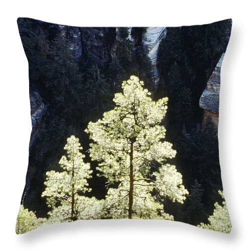 Ponderosa Pines Throw Pillow featuring the photograph Ponderosa Pines by Steve Somerville