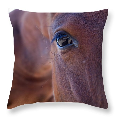 Horse Throw Pillow featuring the photograph Pony by Dustin K Ryan