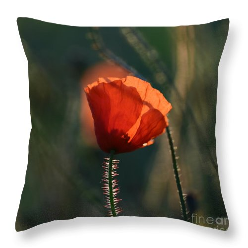 Poppies Throw Pillow featuring the photograph Poppiemania IIi by Rui Militao