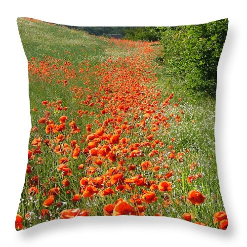 Poppies Throw Pillow featuring the photograph Poppies Awash by Bob Kemp
