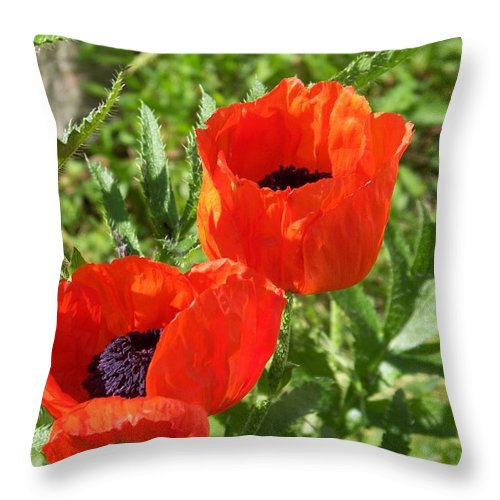 Poppies Throw Pillow featuring the photograph Poppies by Jackie Mueller-Jones