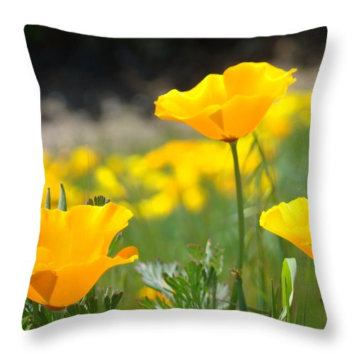 �poppies Artwork� Throw Pillow featuring the photograph Poppy Flower Meadow 11 Poppies Art Prints Canvas Framed by Baslee Troutman