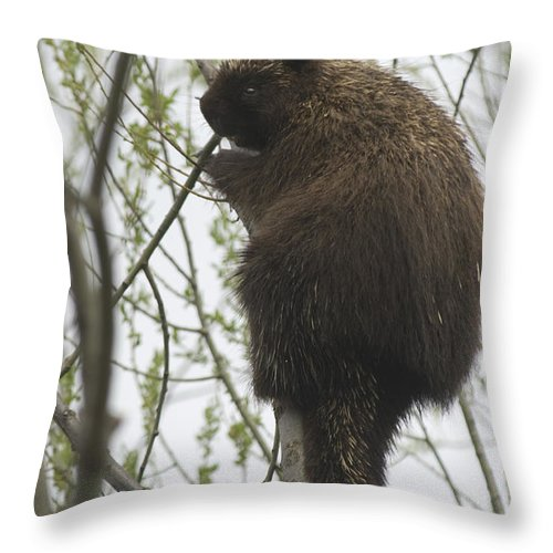 Porcupine Throw Pillow featuring the photograph Porcupine In A Tree by Steve Somerville