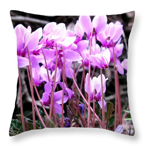 Wold Cyclamens Throw Pillow featuring the photograph Wild Cyclamens by Andonis Katanos