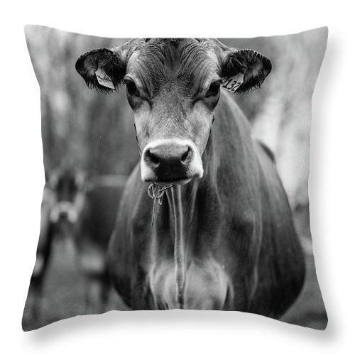 Livestock Throw Pillow featuring the photograph Portrait Of A Dairy Cow In The Rain Stowe Vermont by Edward Fielding