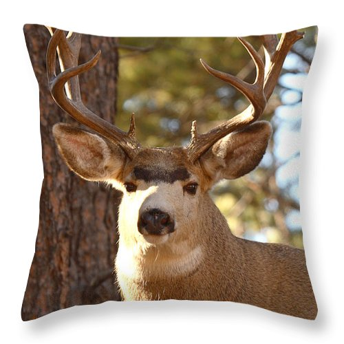 Buck Throw Pillow featuring the photograph Portrait Of A 15-point Buck by Max Allen
