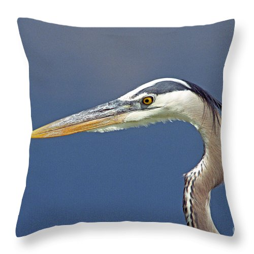 Bird Throw Pillow featuring the photograph Portrait Of A Great Blue Heron by John Harmon