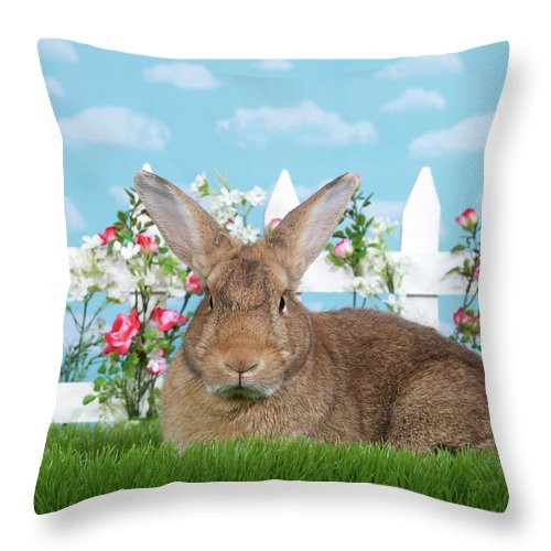 Easter Throw Pillow featuring the photograph Portrait Of A Gregarious Brown Bunny by Sheila Fitzgerald
