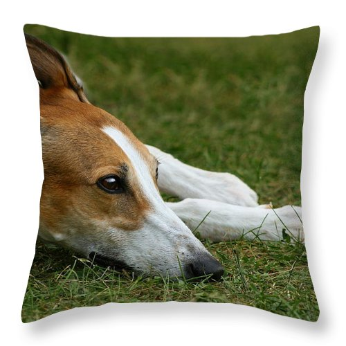 Editorial Throw Pillow featuring the photograph Portrait Of A Greyhound - Soulful by Angela Rath