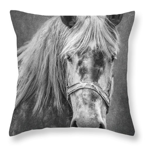 Animal Throw Pillow featuring the photograph Portrait Of A Horse by Tom Mc Nemar