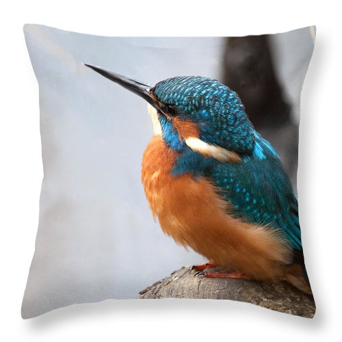 Kingfisher Throw Pillow featuring the photograph Portrait Of A Kingfisher by Bob Kemp