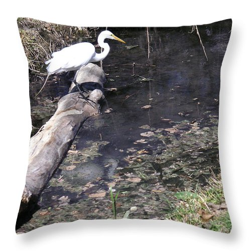 Nature Throw Pillow featuring the photograph Positioning For The Jump by Lucyna A M Green