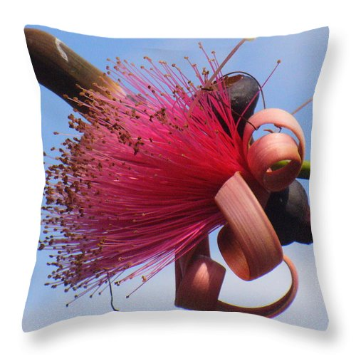 Plants Throw Pillow featuring the photograph Powder Puff Blossom by Peggy King
