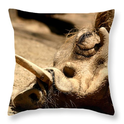 Wart Hog Throw Pillow featuring the photograph Power Nap by Mary Haber