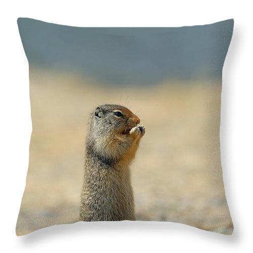Prairie Dog Throw Pillow featuring the photograph Prairie Dog by Sebastian Musial