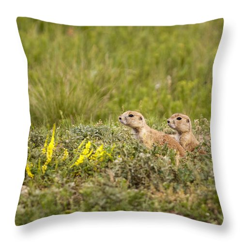 Prairie Dogs Throw Pillow featuring the photograph Prairie Dogs On Lookout by Chad Davis