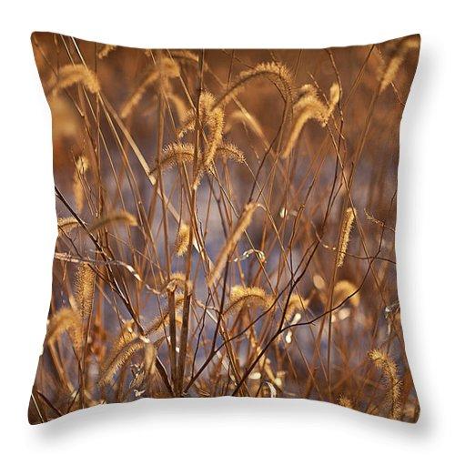 Midewin Throw Pillow featuring the photograph Prairie Grass Blades by Steve Gadomski