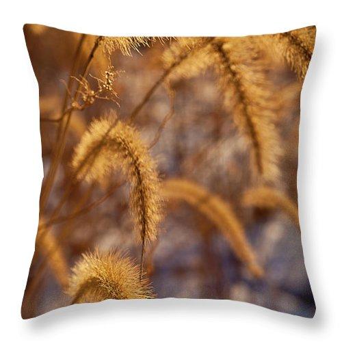 Midewin Throw Pillow featuring the photograph Prairie Grass Detail by Steve Gadomski